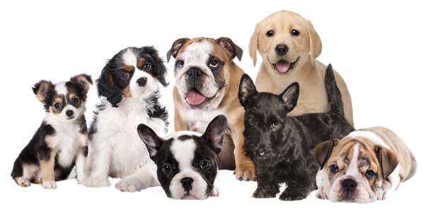 Rally Dog - Szkolenie psów Ewa Fogler Gorzów Wielkopolski