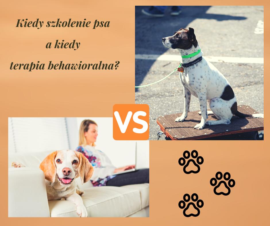 Kiedy szkolenie psa a kiedy terapia behawioralna?