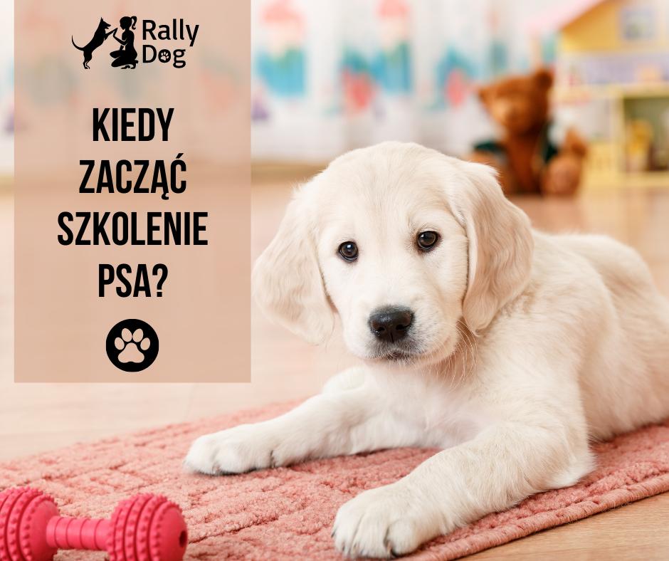Kiedy zacząć szkolenie psa?
